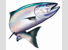 Full Color Decals Fishing Decals King Salmon Color Decal