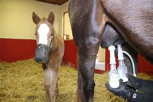 Ramsey Farm Tests Out The Ultimate Ez By Udderly Ez