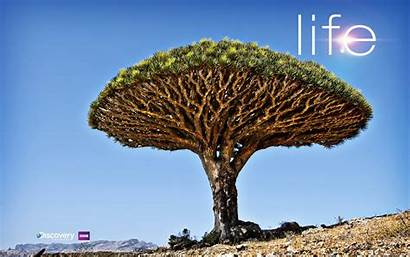 Channel Discovery Tree Desert Trees Theme Wallpapers