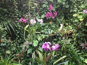 Orchideen Klebrige Blätter : orchideen gelbe bl tter orchideen krankheiten merkmale und tipps zur bek mpfung orchidee ~ Whattoseeinmadrid.com Haus und Dekorationen