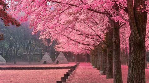tempat  korea selatan  jadi destinasi favorit