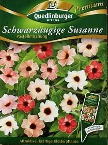 Schwarzäugige Susanne Kaufen : bio samen blumensamen samenrarit ten gem sesamen ~ Lizthompson.info Haus und Dekorationen