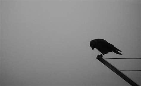 bureau imac the moaning bird who never forgives me himachal watcher