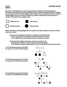 Pedigree Chart Worksheet By Code Biology  Teachers Pay Teachers
