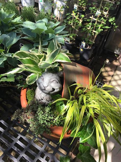 in season now kushners garden patio