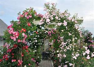 Ranken Blumen Garten : an diesem bogen aus holz ranken zusammen die kletterrosen 39 fourth of july 39 links und 39 jeanne ~ Whattoseeinmadrid.com Haus und Dekorationen