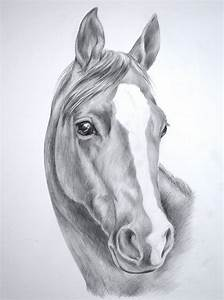 Images For > Wild Horse Drawings In Pencil | art ...