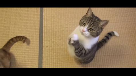funny cat fails compilation  cute kittens