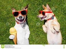 Zwei Lustige Hunde Mit Eiscreme Stockfoto Bild von wiese