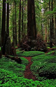 Redwood National Forest California