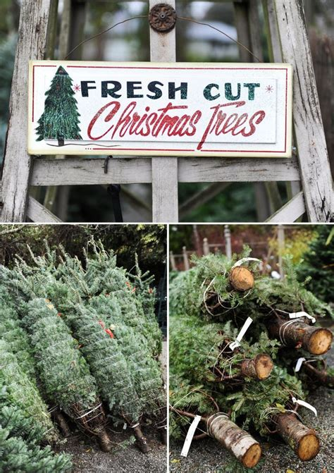 can you trim a christmas tree best 25 tree farms ideas on tree tree farms near me and