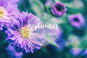 September Birth Flower: Aster - FTD.com