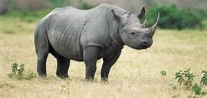 معلومات عن وحيد القرن - موضوع