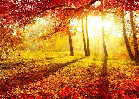 19 Haiku Poems About Autumn  Australian Writers' Centre Blog