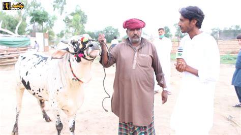 Cow Mandi | Gujar Khan Pakistan | Qurbani k Sastay Janwar ...