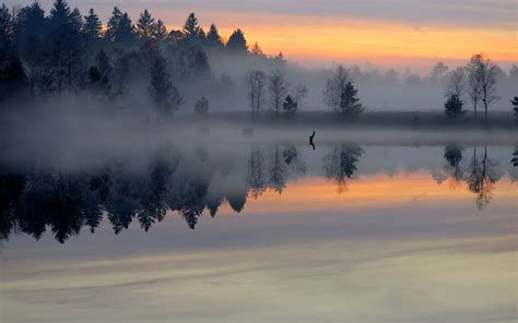 morning pond forest mist smooth surface lake trees
