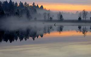 Morning pond forest mist smooth surface lake sunrise trees ...