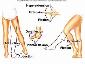 Flexion  Extension  Dorsiflexion  Plantar Flexion