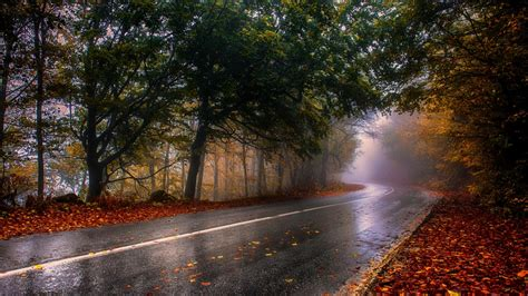 Wood Rainy Road Foliage Foggy Wallpapers