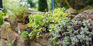 Plante Succulente Espèces Représentatives : jardin d 39 hubert ~ Nature-et-papiers.com Idées de Décoration