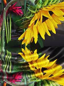 Sunflower Reflection in Water