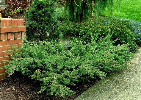 images of shrubs plants shrubs combs landscape