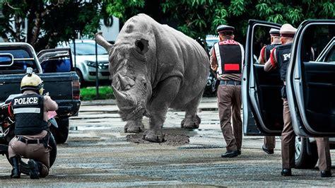 animals wild zoo escaped