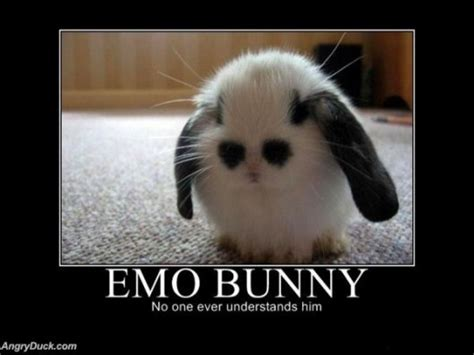 Funny Emo Memes - how cute i want this furry jumpy little friend i would understand him he s perfect