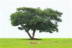 Laubbaum Mit Roten Blättern : laubbaum archivbilder abgabe des download 2 356 geben fotos frei ~ Frokenaadalensverden.com Haus und Dekorationen