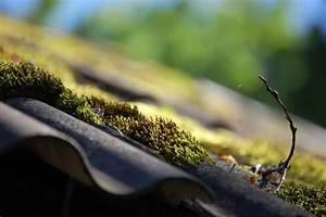 Moos Auf Gartenplatten Entfernen : moos entfernen hinweise methoden tipps ~ Michelbontemps.com Haus und Dekorationen