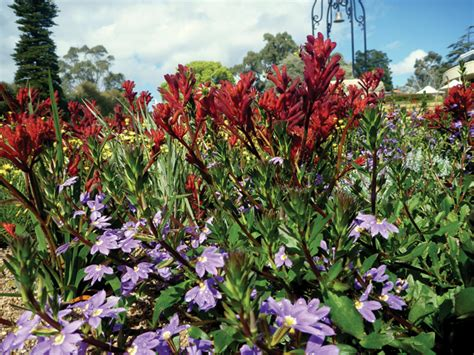 Top Ten Native Plants