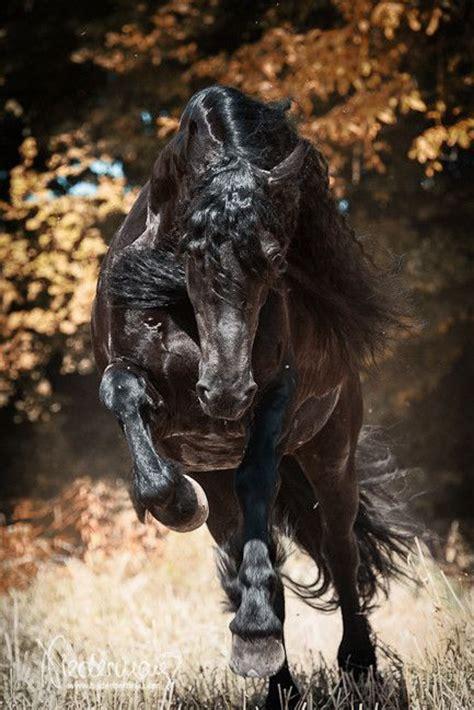 Die Besten 17 Ideen Zu Pferde Bilder Auf Pinterest
