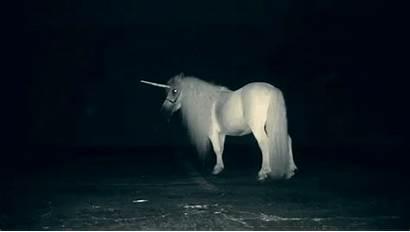 Unicorn Animated Horses Pegasus Gifs Animals Animations
