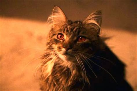 harry potter cat what is the name of filch s cat the harry potter trivia