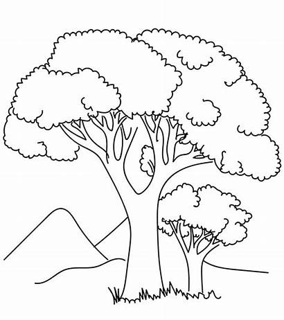 Coloring Tree Pages Trees Printable Colouring Palm