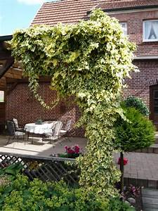 Kletterpflanzen Für Balkon : kletterpflanzen balkon kletterpflanzen auf balkon und ~ Lizthompson.info Haus und Dekorationen