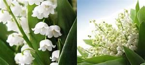 Offrir Un Bouquet De Fleurs : langage des fleurs signification des fleurs offrir un bouquet de fleurs ~ Melissatoandfro.com Idées de Décoration
