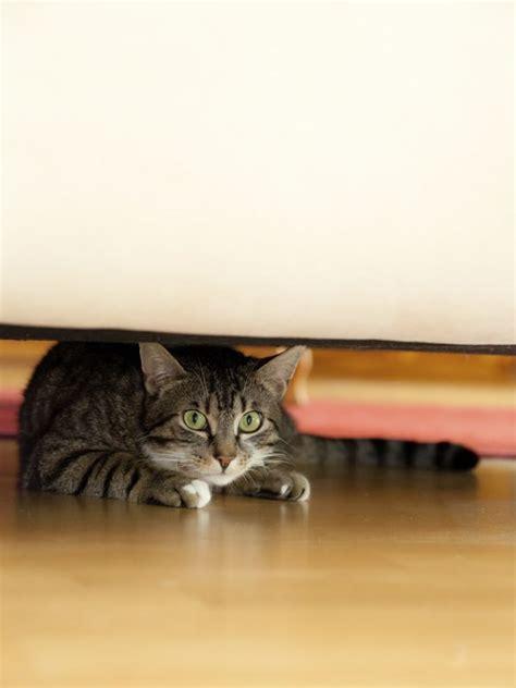 odeur de pipi de chat sur canape les 25 meilleures id 233 es concernant pipi de chat sur odeur de pipi urine de chat