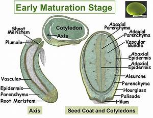 Labeled Seed Diagram