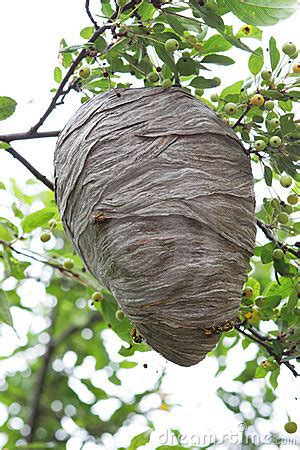 beehive stock images image