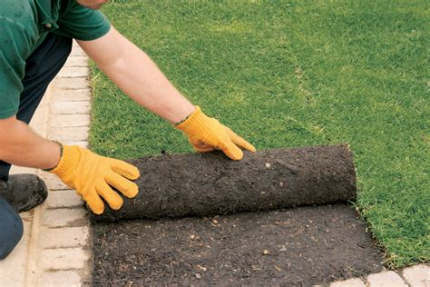 when to lay sod sod installation tips sod source