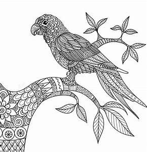 Kolorowanki Dla Dorosych Ptaki Do Wydruku Cz 4
