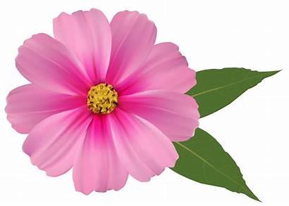 Flower Flowers Clipart Transparent Wiosenne Daisy Druku