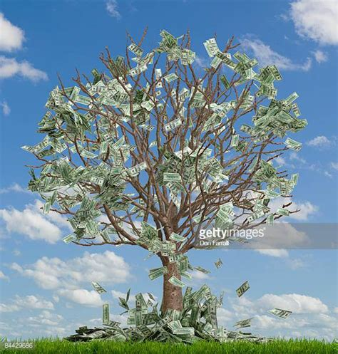 Images Of Money Tree Money Tree Stock Photos And Pictures Getty Images