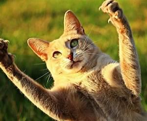 Katzen Garten Vertreiben : wie kann katzen aus dem garten vertreiben best 28 images ~ Michelbontemps.com Haus und Dekorationen