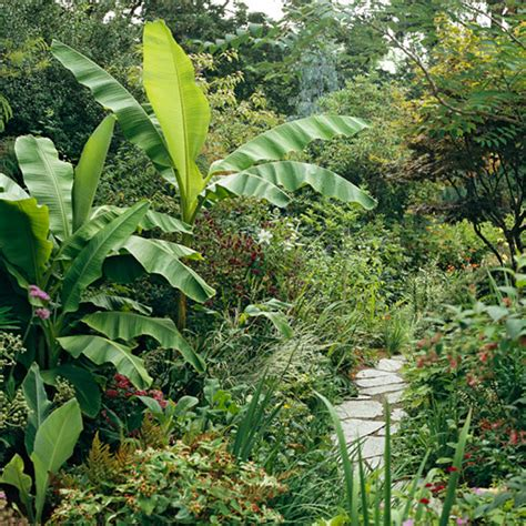 tropical plants in cold climate gardens