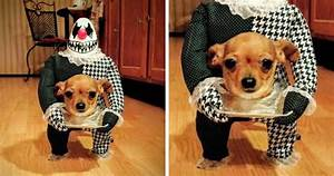 89, Terrifyingly, Pawsome, Halloween, Costumes, For, Dogs