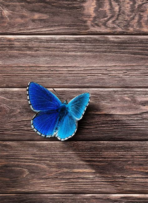 You can choose the blue bird wallpapers hd apk version that suits your phone, tablet, tv. Blue single butterfly on wooden plate background mobile wallpaper #birds #Blue #single # ...