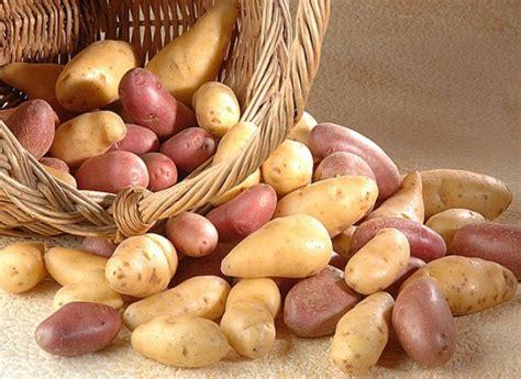comment cuisiner la pomme de terre comment cuisiner la pomme de terre d 39 hiver recettes