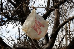 plastic bag in tree picture free photograph photos public domain